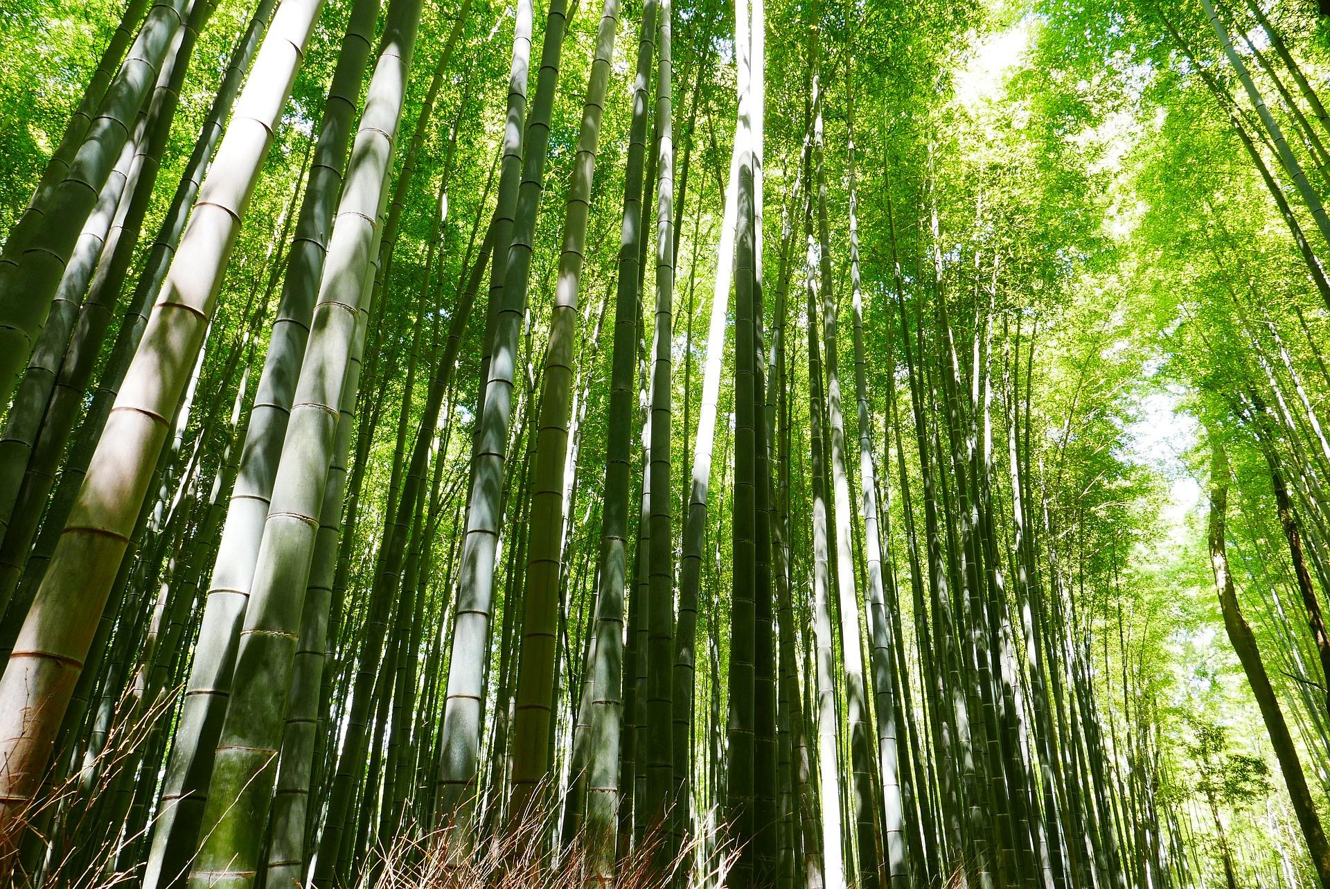 bamboo-2074751_1920